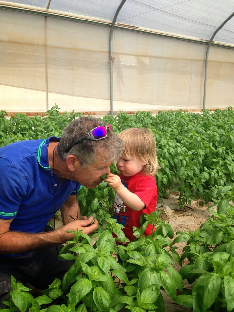 חוות תבלינים של משק רוזנבלום