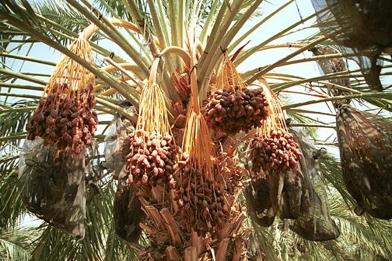 סיור חקלאים ומשקים בבקעת הירדן